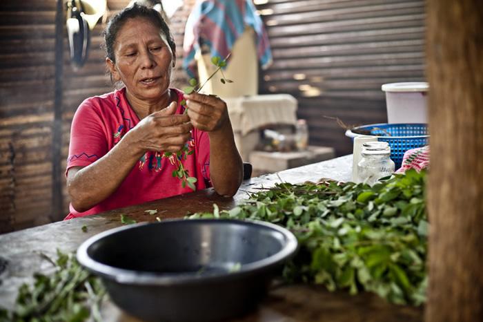 María Tránsito Peréz Ramírez cosechando maíz, es campesina de la comunidad La Lupita e integrante de la asociación Madre Tierra.